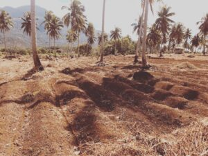 Impact Investing in the Philippines - making an island self-sustaining by strengthening farming practices.